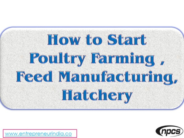 Dairy & Poultry