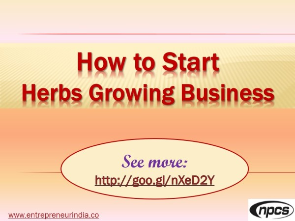 how-to-start-herbs-growing-business