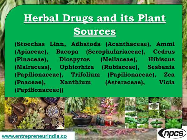 Herbal Drugs and its Plant Sources