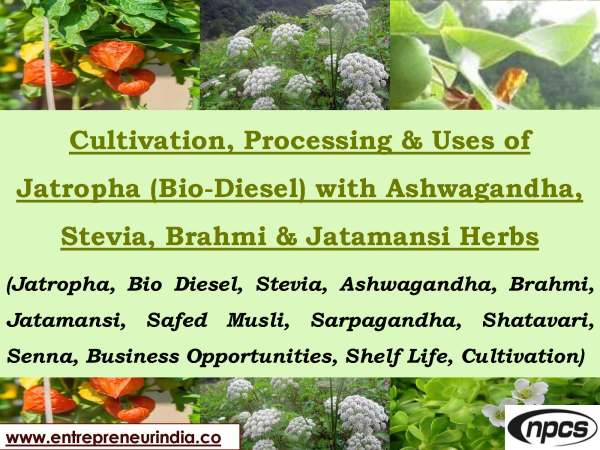 Cultivation, Processing & Uses of Jatropha (Bio-Diesel) With Ashwagandha, Stevia & Jatamansi Herbs_Page_01