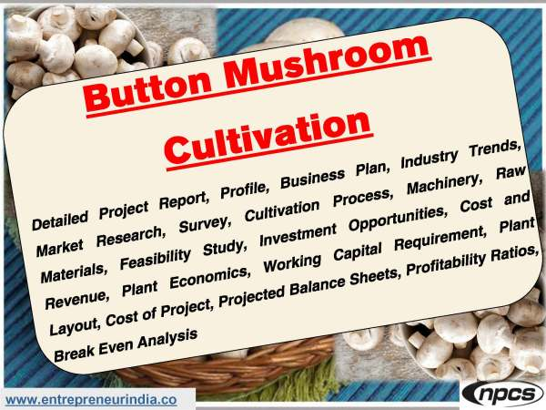 Button Mushroom Cultivation.jpg