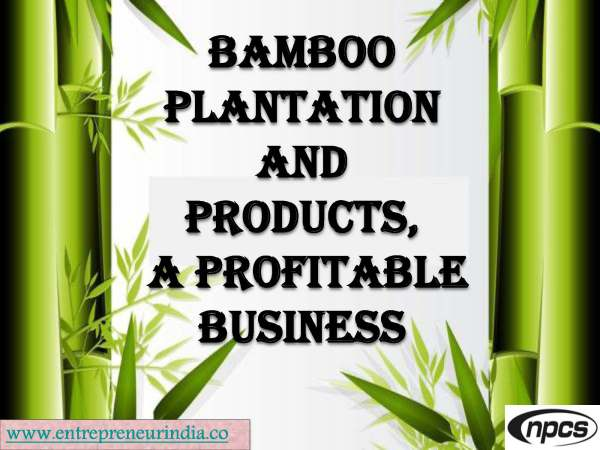 Bamboo Plantation and Products, a Profitable Business.jpg