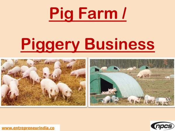 Pig Farm  Piggery Business.jpg