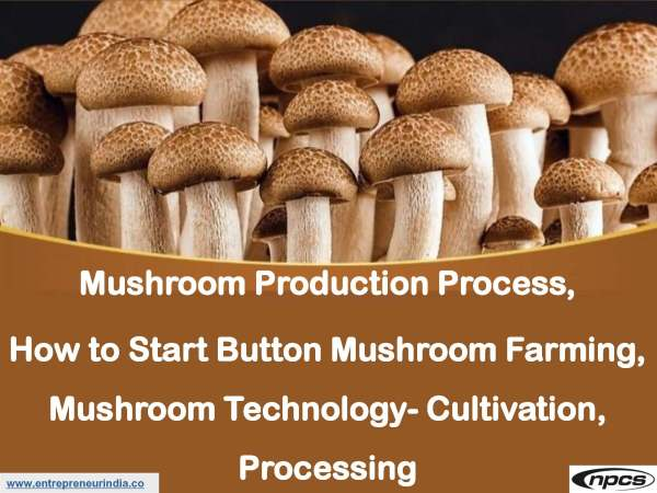 Mushroom Production Process, How to Start Button Mushroom Farming.jpg