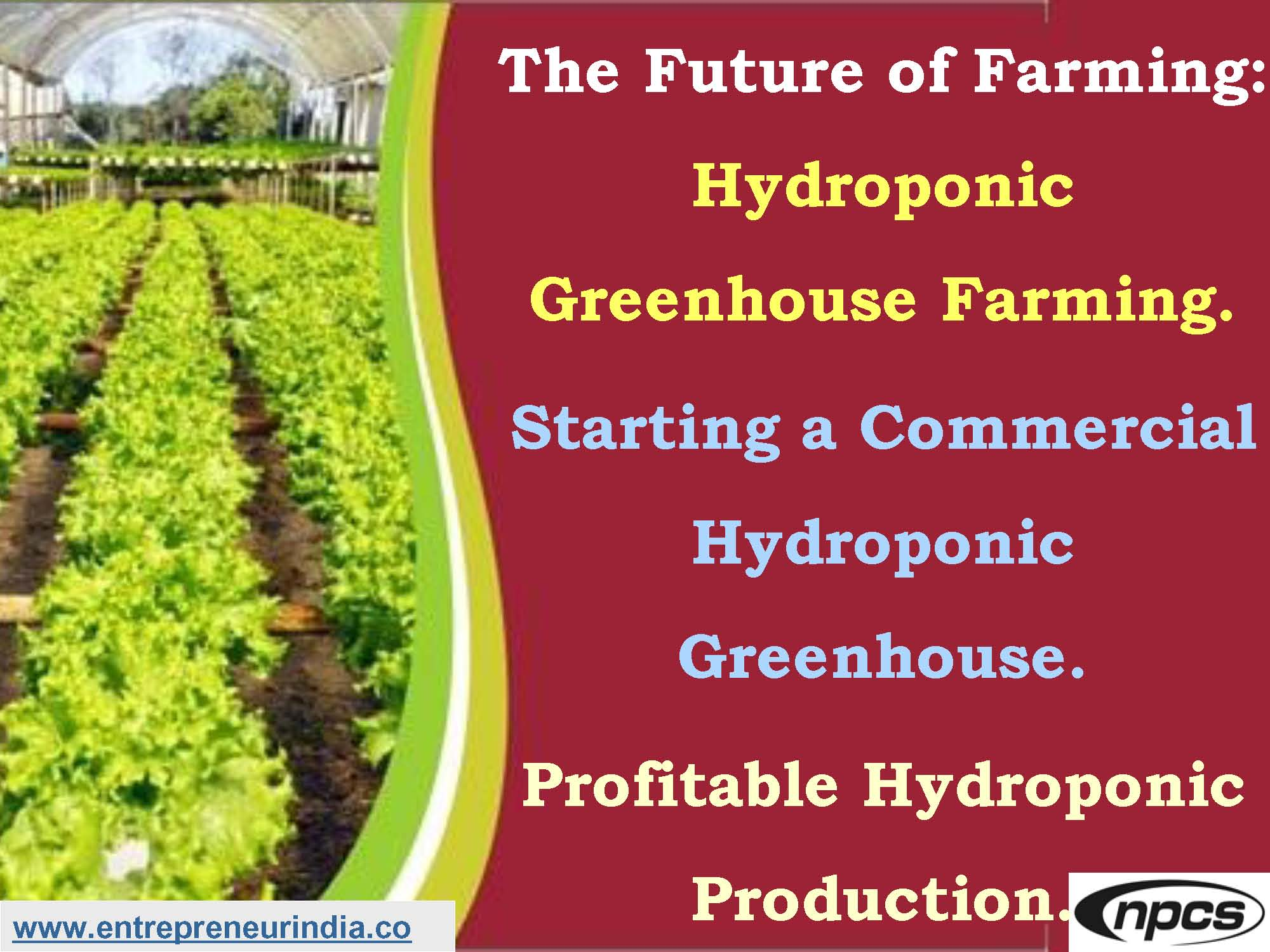 The Future of Farming: Hydroponic Greenhouse Farming