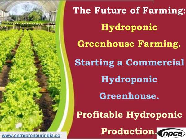 The Future of Farming Hydroponic Greenhouse Farming..jpg