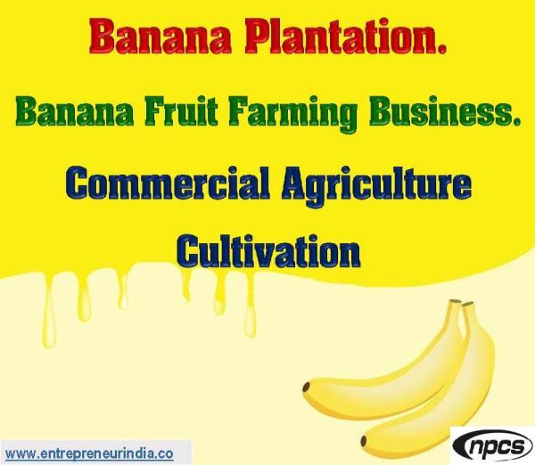 Banana Plantation.jpg